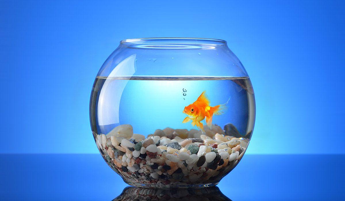 the-newsLINK-group-goldfish-presentation-hero